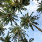 Dit is wat een palmboom met je doet